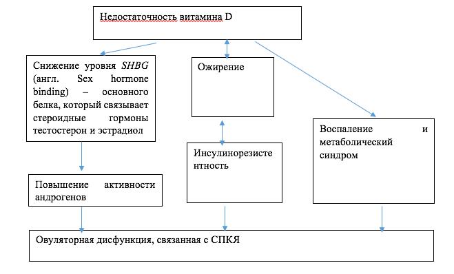 Схема: Связь дефицита витамина D с факторами, обусловливающими овуляторную дисфункцию при СПКЯ.
